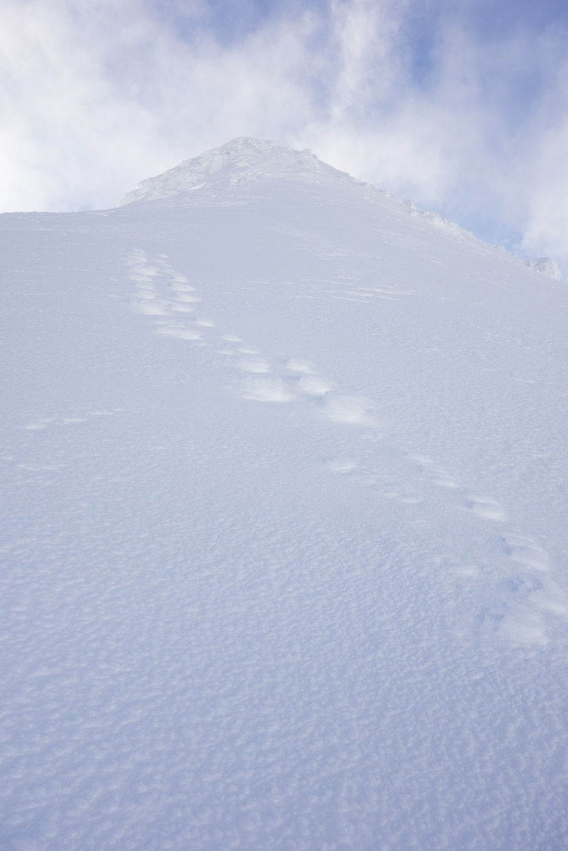 Raised Footprints on the ascent to Spiderean Choire Leith